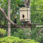 Rhinoceros hornbill artificial nest box - P1012942