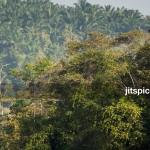 P2260019 - Forest & Oil palm plantation