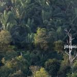 P8105984 - Forest & Oil palm plantation