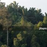 P8105986 - Forest & Oil palm plantation