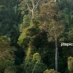 P8105995 - Forest & Oil palm plantation
